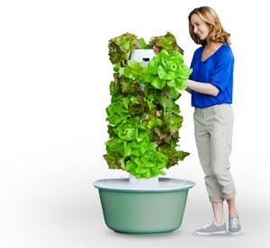 Tower Garden women